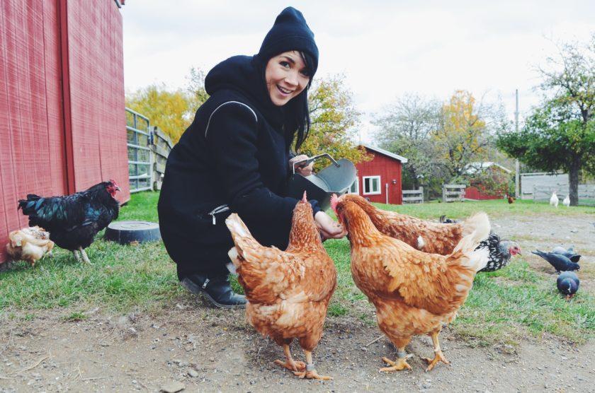 Farm Sanctuary_hot for food